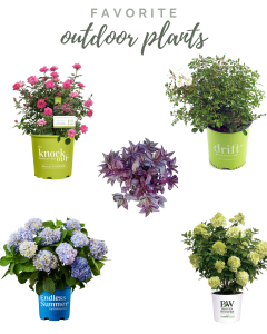 6 of my Favorite Plants for Outside